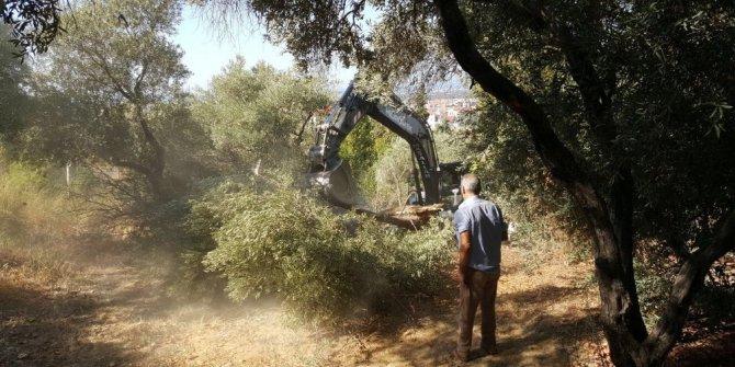 Yaya yolu yapılacak diye 50'ye yakın ağaç kesildi iddiası