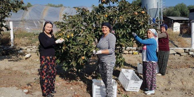 'Cennet'ten Gelen Tatlar' projesi ile Emine Erdoğan'ın dikkatini çekti