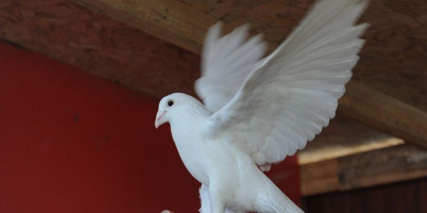 Bursa'da kuş gribi iddiaları yalanlandı