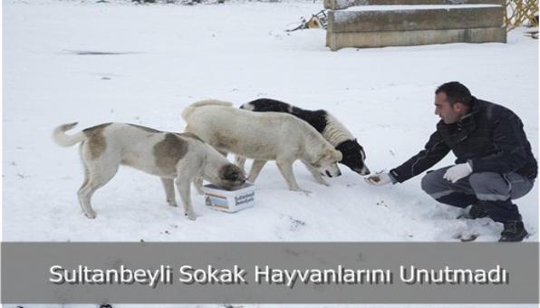 Sultanbeyli Sokak Hayvanlarını Unutmadı