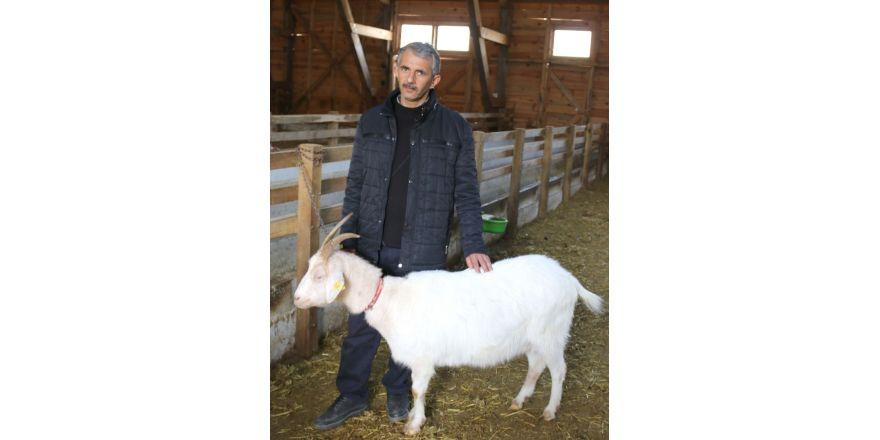 İnternetten satışa çıkardığı koyunlarını kendi eliyle dolandırıcılara teslim etti