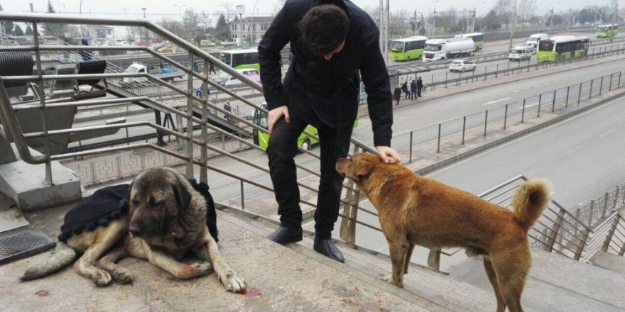 Yaralı köpeğin başından bir an olsun ayrılmadı