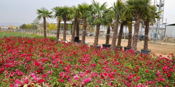 Elazığ'da 106 bin ağaç toprakla buluşuyor