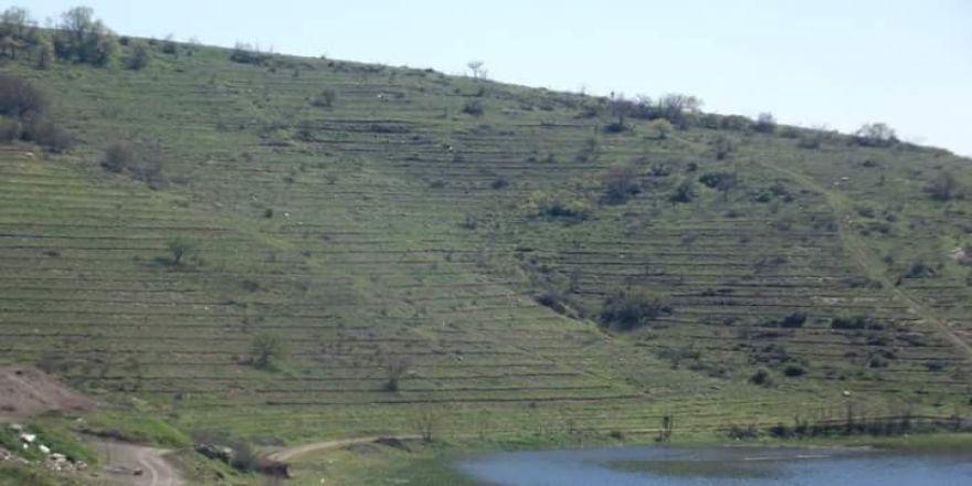 Baraj havzaları yeşillendi