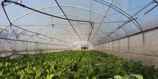 Trabzon'da yılda yaklaşık 25 bin ton sebze üretiliyor ama...