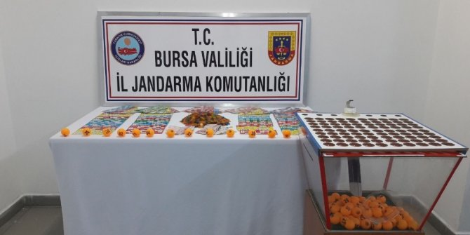 Bursa'da kumar operasyonu