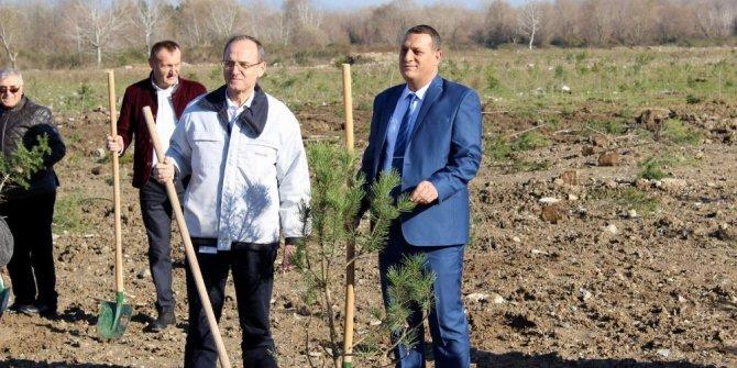 Arifiye'de eski döküm sahası orman oluyor