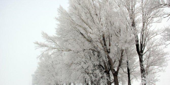Doğu'da Sibirya soğukları