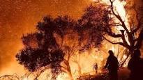 Türkiye'de Son Beş Yılda Ne Kadar Orman Yangını Meydana Geldi?