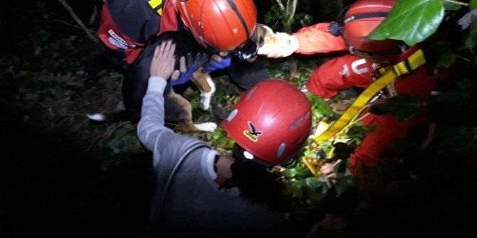Giresun'da yaralı karaca tedavi altına alındı, çukura düşen köpeği AKUT kurtardı