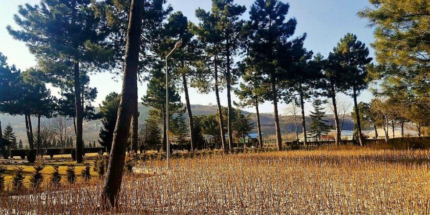 Zonguldak'ta 100 Bin adet fındık toprakla buluşmaya hazır