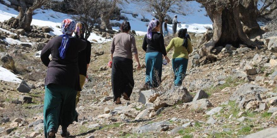 Pancar toplamak için 4 kilometre yürüyorlar