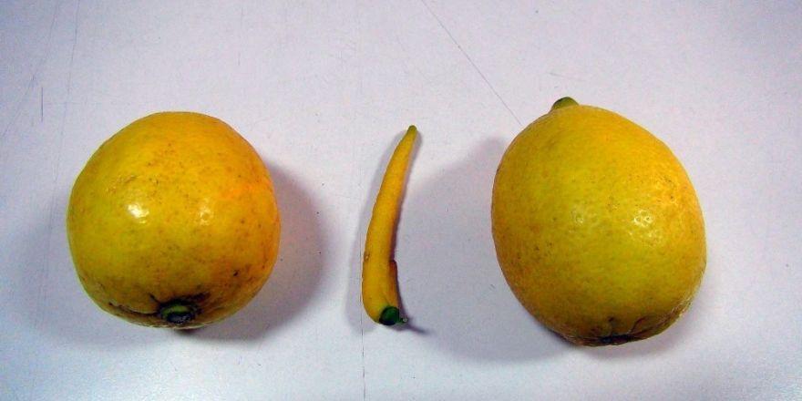 Biber görünümlü limon