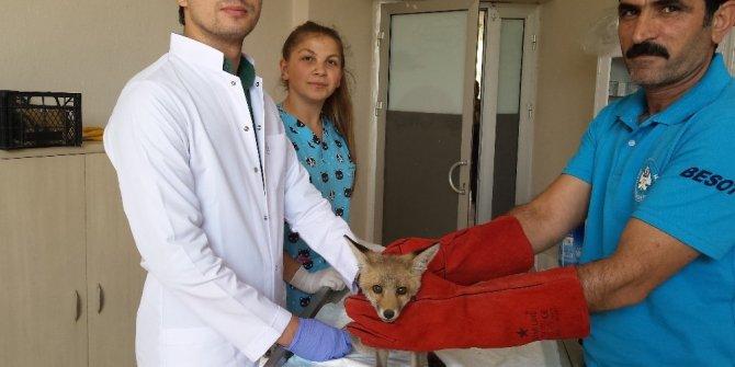 Yaralı yaban hayvanlarına umut oldular