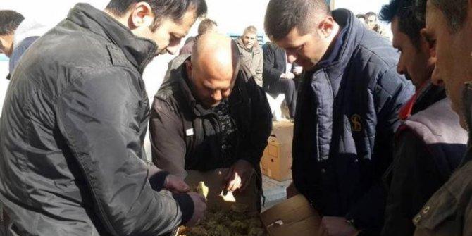 Selendi'de yeni mahsül tütün alımları başladı