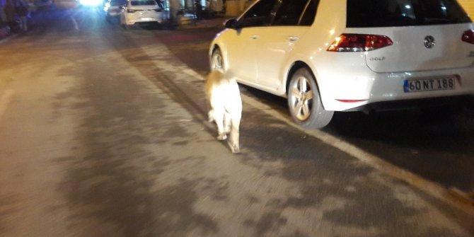 Silvan'da başıboş dolaşan köpekler korku salıyor