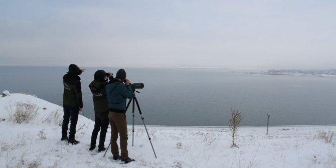 Van'da 'kış ortası su kuşu sayımı' başladı