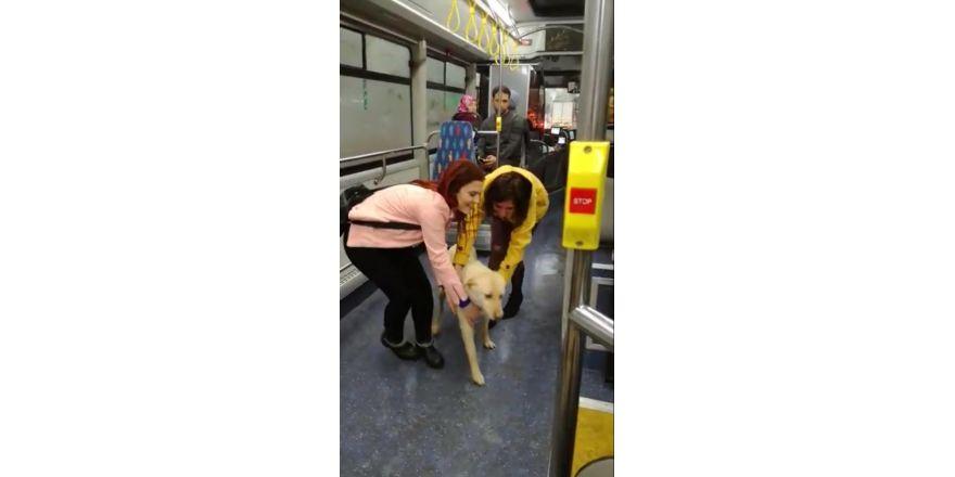 Yağmurdan kaçan sokak köpeği belediye otobüsüne sığındı