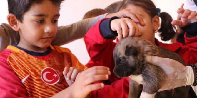Bingöl'de  372 sokak hayvanı tedavi edildi