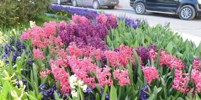 Çorum'a rengarenk çiçeklerle bezendi