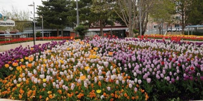 Park ve Bahçeler Müdürlüğü Kırşehir'de her alanda yenileme çalışması yapıyor