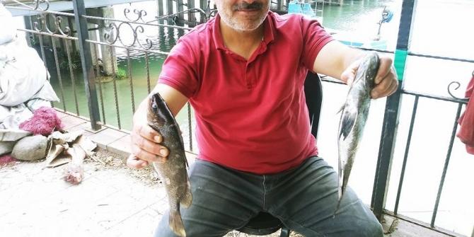 Balıkçıların ağına taş balığı olarak bilinen Ekşina takıldı
