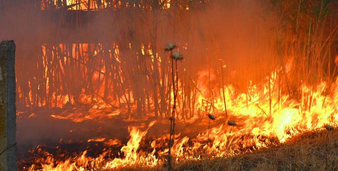 Manisa'da 10 hektarlık otluk alan cayır cayır yanıyor