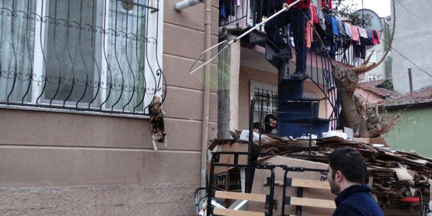 Parmaklıklara sıkışan kediyi kurtarmak için operasyon yapıldı