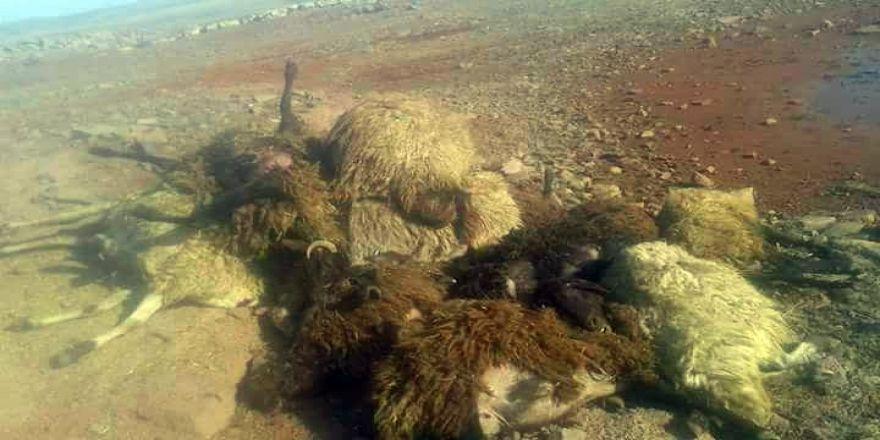 Siverek'te 21 koyun telef oldu