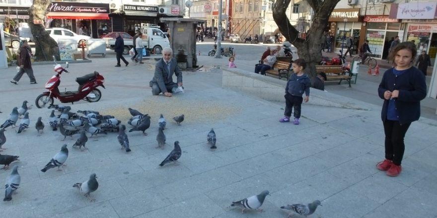 Burhaniye'de güvercinler ilgi odağı oldu
