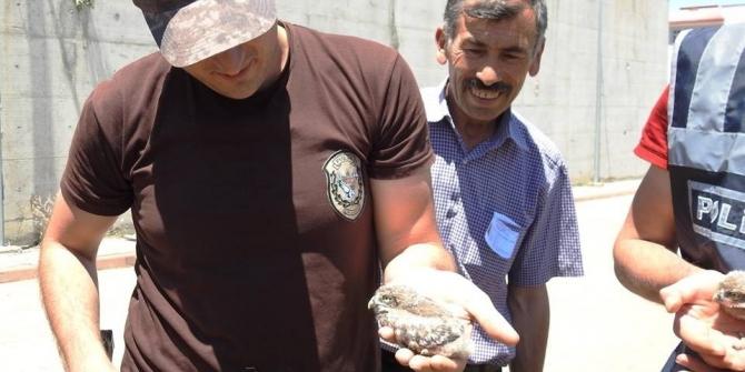 Yavru Kukumav kuşlarına Özel Harekatçı şefkati