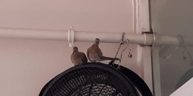 Güvercinler kurum içine yuva yaptı