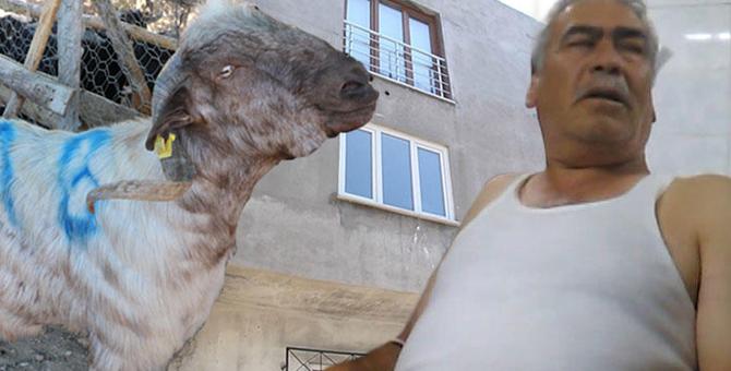 Vatandaşın kafasına gökten kurbanlık keçi düştü!