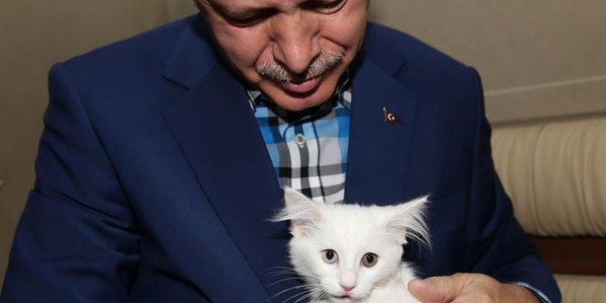 Erdoğan talimat verdi! Cezalar ağırlaşıyor