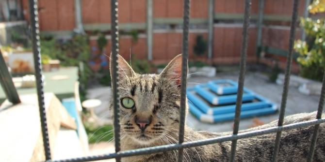"""""""Kedilerin Dedesi""""nin 12 kedisi bir hafta içerisinde telef oldu"""