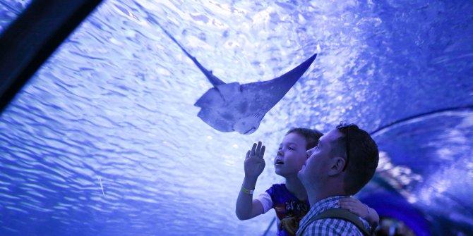10 bin balıklı Antalya Akvaryum'da balık sayısı iki katına çıkacak