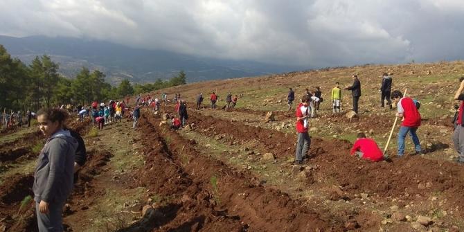 Hatay'daki yangın bölgesine 300 fidan dikildi