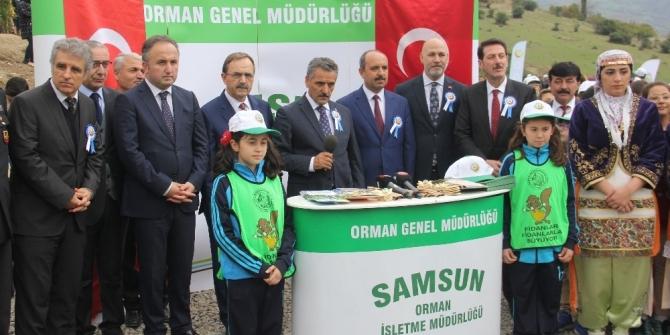 Samsun'da 3 bin fidan toprakla buluştu