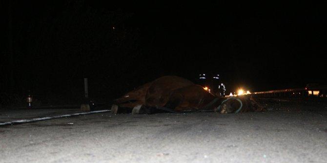 Tokat'ta otomobilin çarptığı at telef oldu, 2 kişi yaralandı