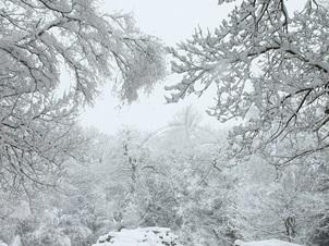 Pendik Belediyesiden Kar İçin Yoğun Önlem