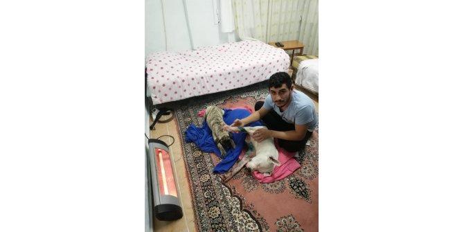 İzmir'de köpeğe satırlı saldırı iddiası