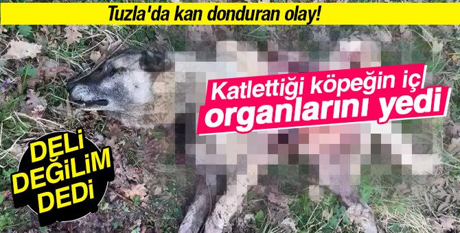 """Tuzla'da kan donduran olay! Katlettiği köpeğin iç organlarını yedi """"Deli değilim"""" dedi"""
