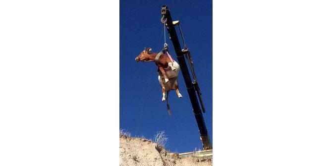 Van'da çukura düşen ineği, itfaiye ekipleri kurtardı
