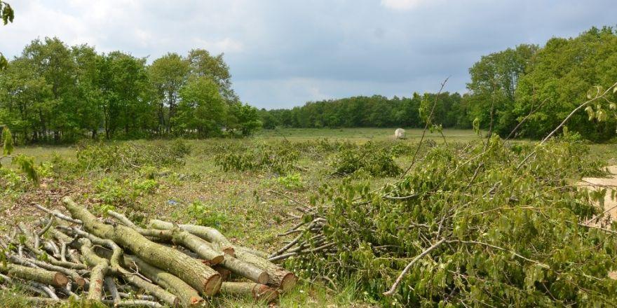 Silivri'de ormanlık alandaki ağaçların kesilmesine tepki