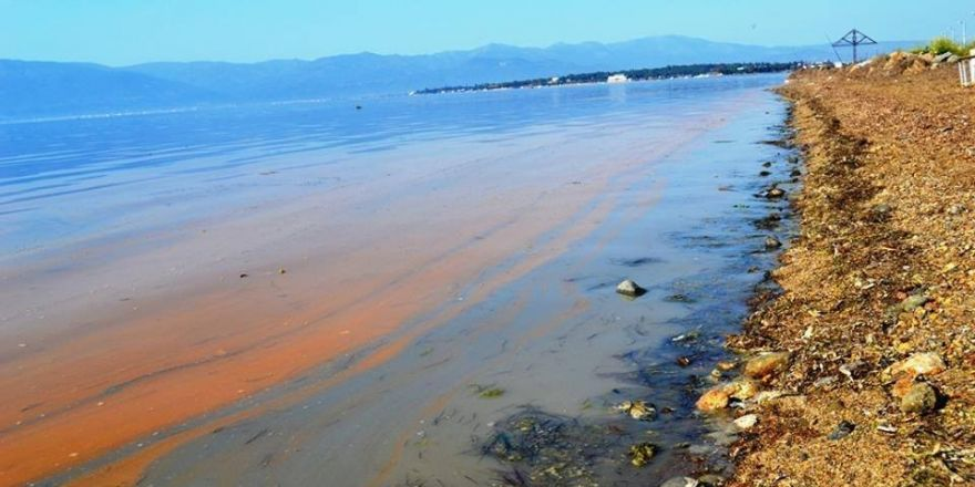 Burhaniye'de deniz sarıya boyandı