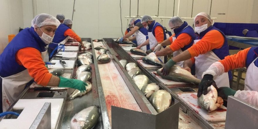 Trabzon'dan Japonya'ya somon balığı ihraç edilecek