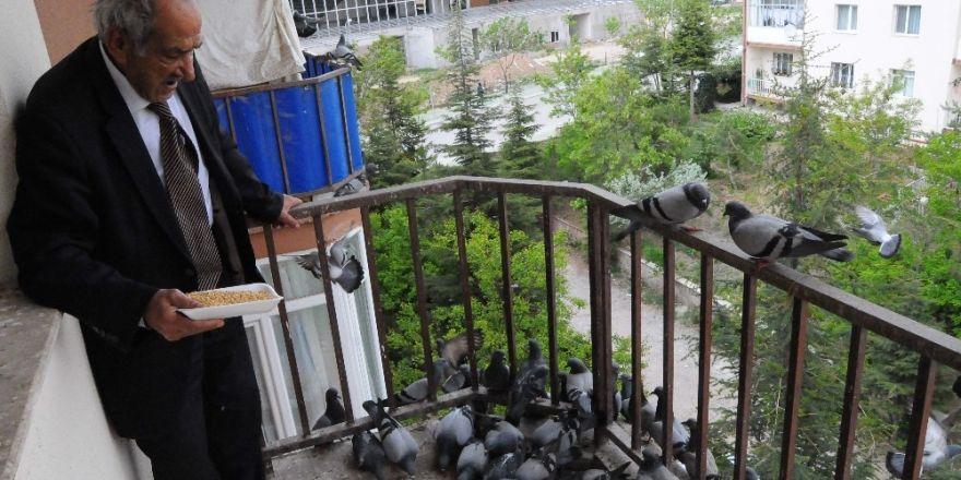 Onlarca güvercini balkonunda besliyor