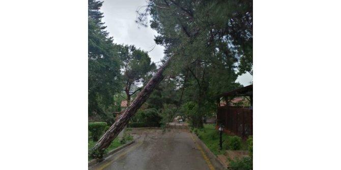 Amasya'da şiddetli rüzgar ağaçları devirdi, araçlara hasar verdi