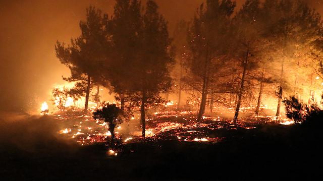 Ormanlarımız yanıyor: 15 orman yangını ve 12 kırsal alan yangını!