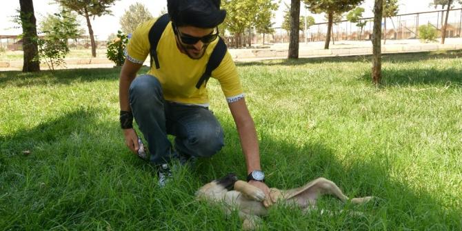 Diyarbakırlı vatandaşlardan Hayvan Bakımevi ve Rehabilitasyon Merkezi'ne ziyaret
